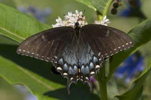 butterfly-1953251_640